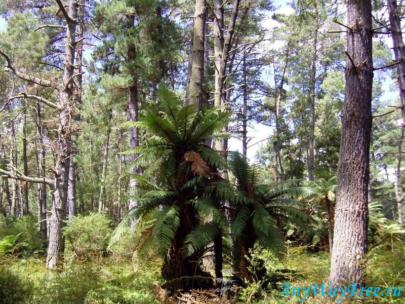 Национальный парк Пурнулулу