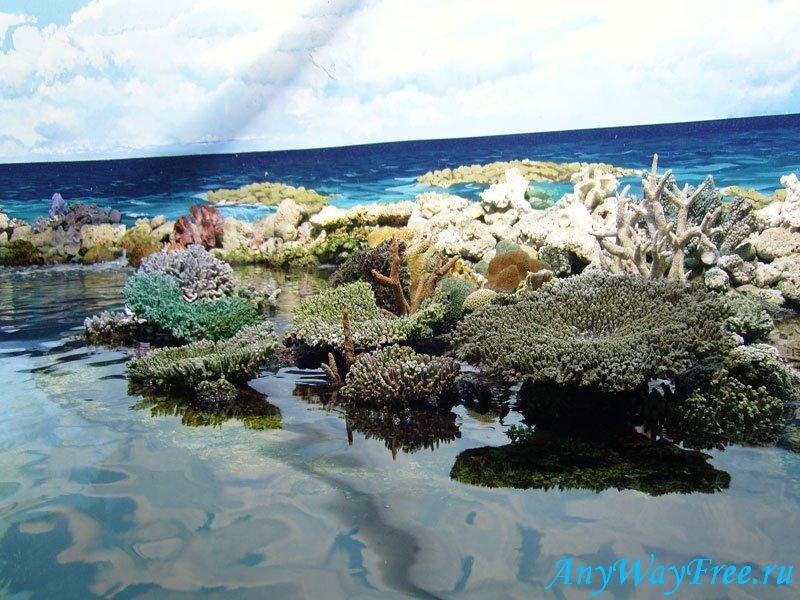 Новый кораллловый риф