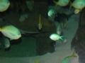 Морские обитатели фото