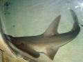 Морские обитатели акулы
