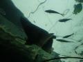 Под акулой в аквариуме Сиднея