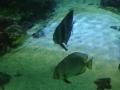 Рыбы морские обитатели