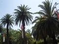 Пальмы в Сиднее