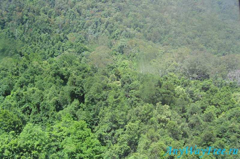 Тропический лес Австралии