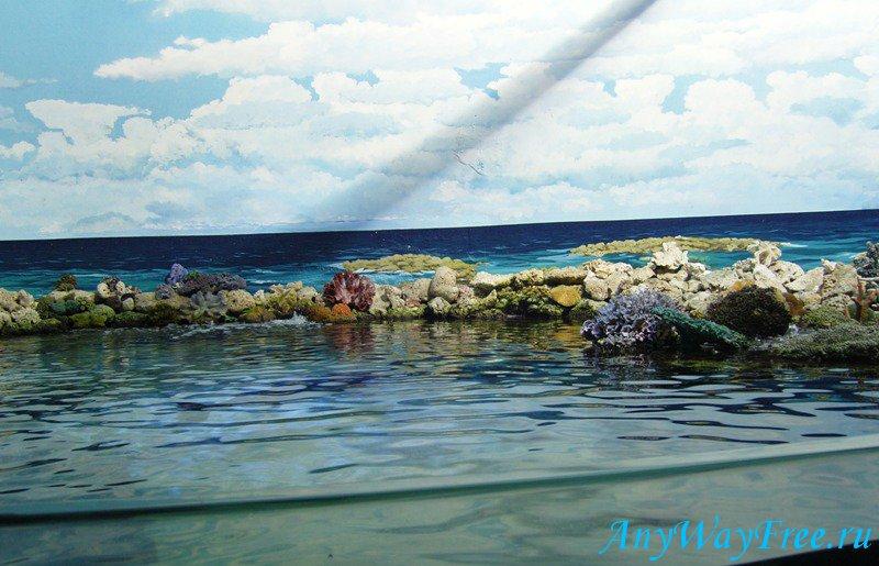 Австралия риф