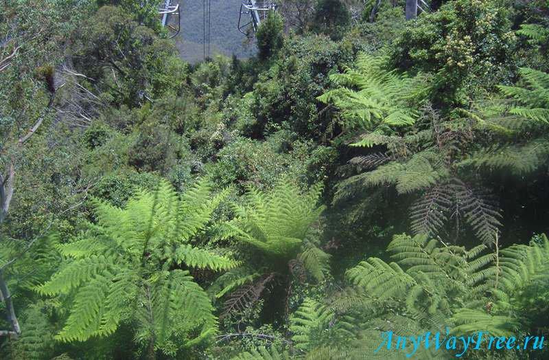 растительный мир Австралии
