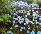 Ново-Зеландские цветы