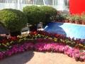 Цветы в Пекине
