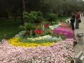 Цветочные сюжеты Пекина