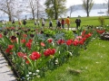 Цветочные газоны