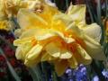 Жетлый цветок