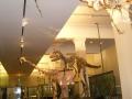 Динозавры в Музее Окленда
