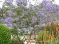 Новая Зеландия цветет