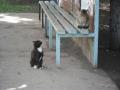 Кошки на автобусной остановке