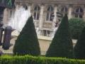 Кустарник на воне фонтана