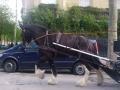 Гужевой транспорт