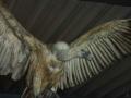 Птица - Зверь
