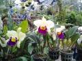 Цветы в саду Нонг Нуч