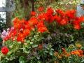Зимний сад Окленда